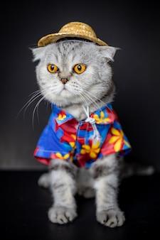 Szkocki zwisłouchy kot ma na sobie koszulę i czapkę.