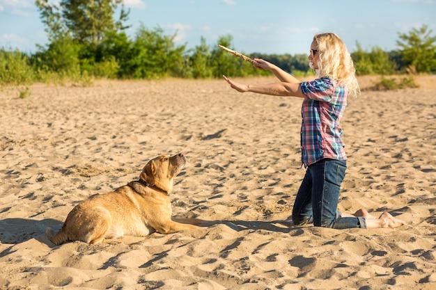 Szkolenie psa duży zabawny pies labrador wykonuje komendę połóż się i czeka na nagrodę cudowną...