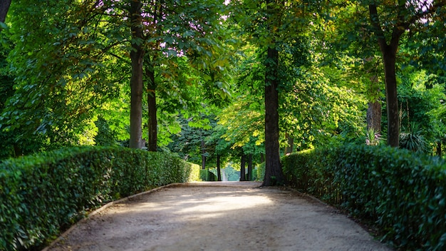 Szlak gruntowy na spacer w parku retiro w madrycie.