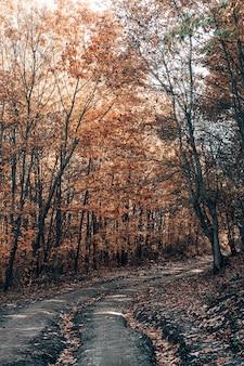 Szlak leśny w lesie jesienią