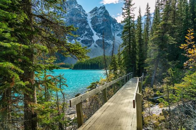 Szlak pieszy brzegiem jeziora w lesie w słoneczny dzień. jezioro morenowe, park narodowy banff, canadian rockies, alberta, kanada.