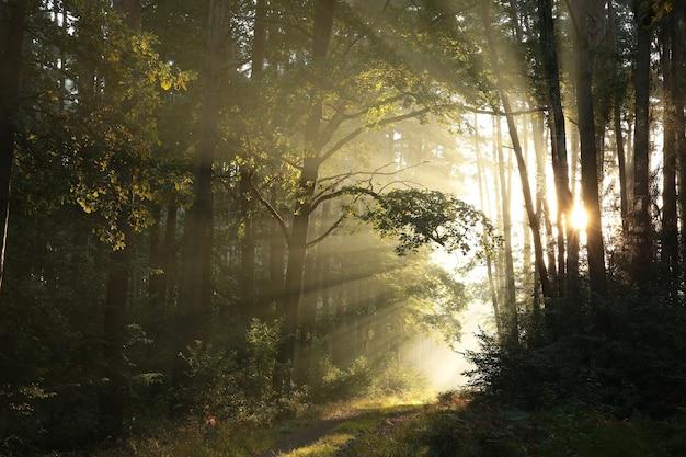 Szlak przez jesienny las w mglisty słoneczny poranek