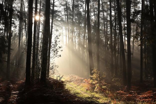 Szlak przez las iglasty o wschodzie słońca przy mglistej pogodzie