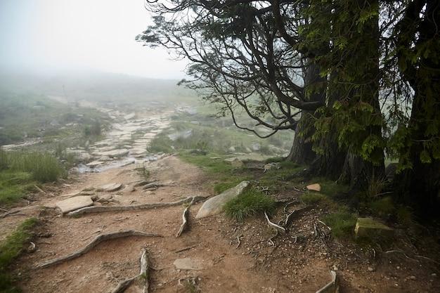 Szlak turystyczny la rhune w mglistym lesie w deszczową pogodę