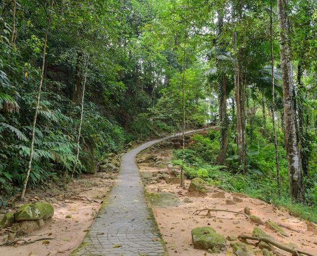 Szlak turystyczny przez las, tajlandia