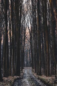 Szlak w majestatycznym lesie liściastym w mglisty wrześniowy poranek.