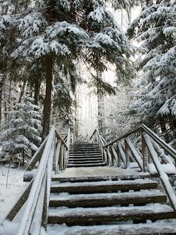 Szlak w zaśnieżonym lesie