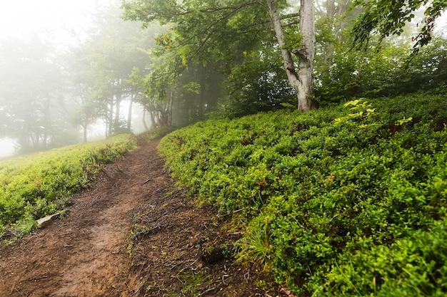 Szlak wśród porannych lasów znikający w porannej mgle