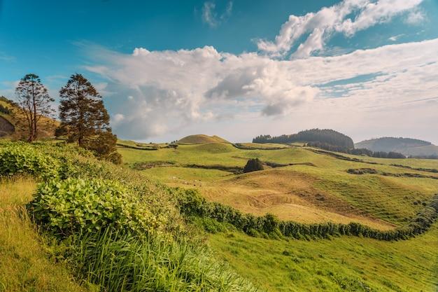 Szmaragdowo zielone wzgórza wyspy san miguel. azory. portugalia