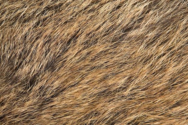 Szorstkie futro teksturowanej tło