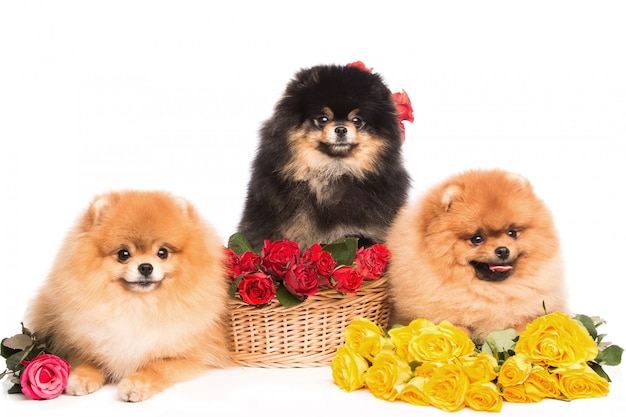 Szpice w koszyku z kwiatami
