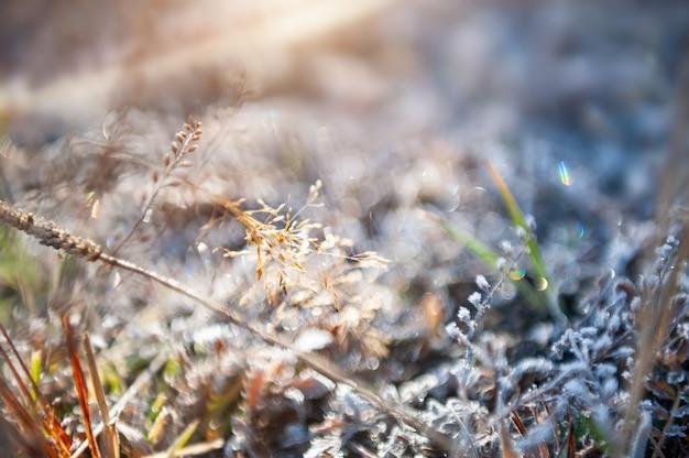 Szron na roślinach w jesiennym lesie. obraz makro, płytka głębia ostrości. piękne tło przyrody