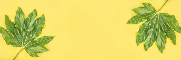 Sztandar zieleni tropikalni liście z kroplami deszczu na kolorze żółtym