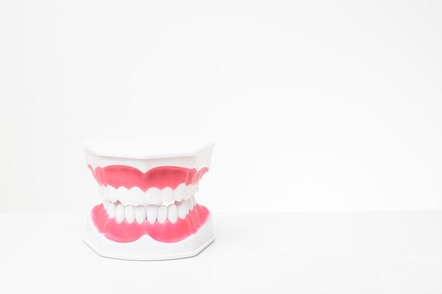 Sztuczne modele zębów na białym tle demonstracji opieki stomatologicznej