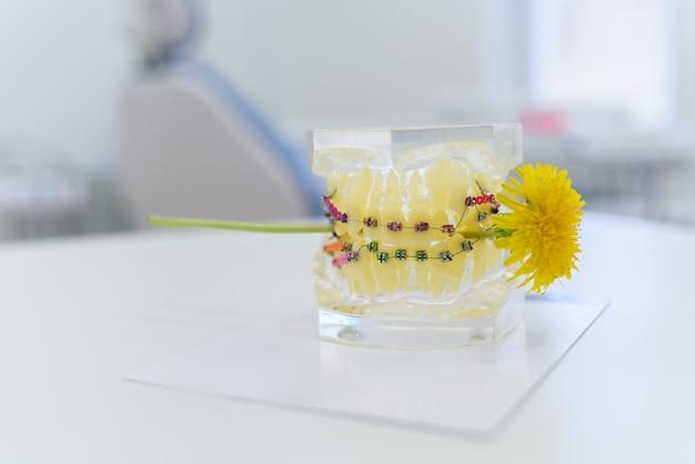 Sztuczne szczęki ze szelkami, które gryzą mniszka lekarskiego
