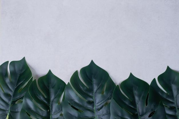 Sztuczne zielone liście na białym tle.