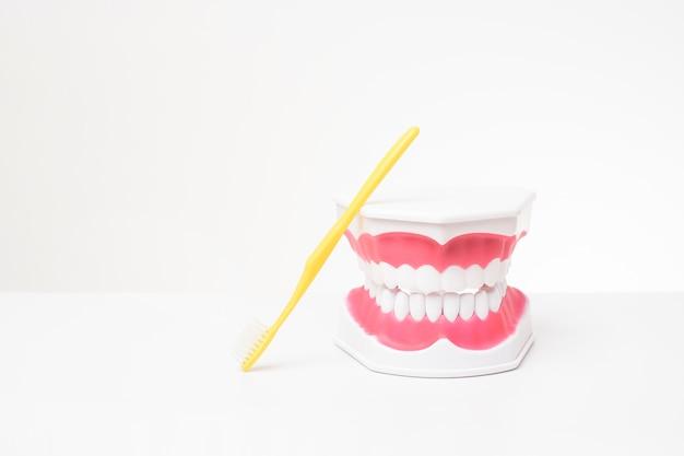 Sztuczny zębu model na bielu stole