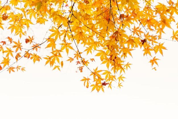 Sztuka kolorowe malownicze jesienią obszarów wiejskich
