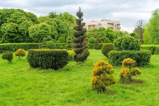 Sztuka topiary w projektowaniu parków. przycięte drzewa i krzewy w letnim parku miejskim. wiecznie zielony park krajobrazowy