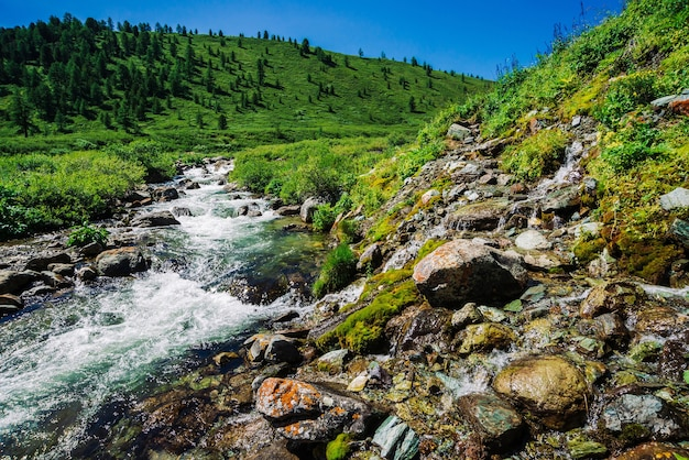 Szybki strumień wody górskiego potoku wśród głazów w jasnym świetle słonecznym w dolinie