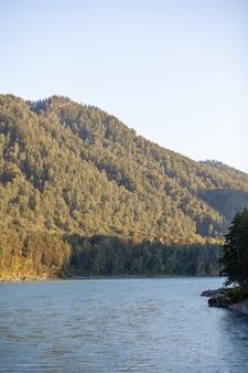 Szybko płynąca szeroka i pełna górska rzeka. brzeg jest widoczny na tle pięknego lasu. duża górska rzeka katun, kolor turkusowy, w górach ałtaj, republika ałtaju