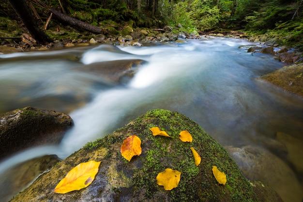 Szybko przepływa przez dziki zielony górski strumień rzeki z krystalicznie czystą wodą i jasnożółtym liściem na dużych mokrych głazach. piękny krajobraz dzikiej przyrody.