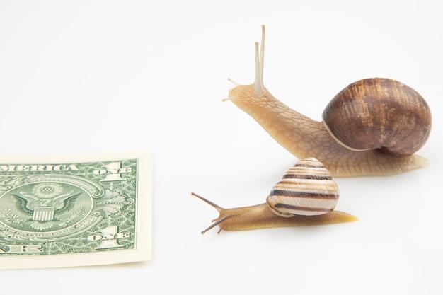 Szybkość osiągania dobrobytu finansowego. ślimaki biegną do mety z pieniędzmi.