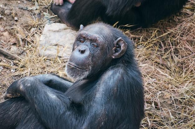 Szympans siedzi zamyślony