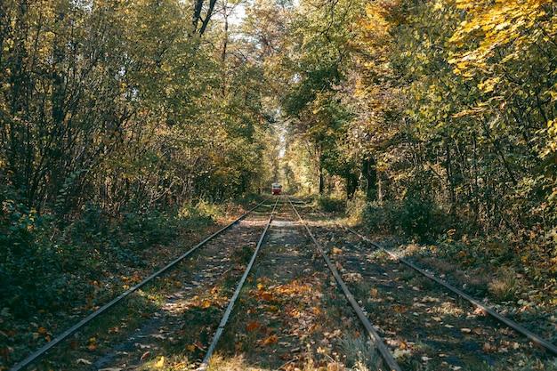 Szyny do pociągu w lesie jesienią