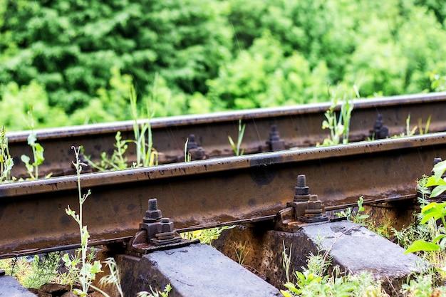 Szyny kolejowe z bliska mocowania śruby przed zielona trawa w lesie