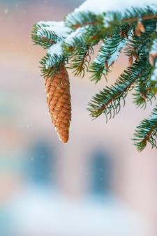 Szyszka drzewo na śniegu
