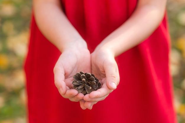Szyszka jodły na dłoniach dziecka