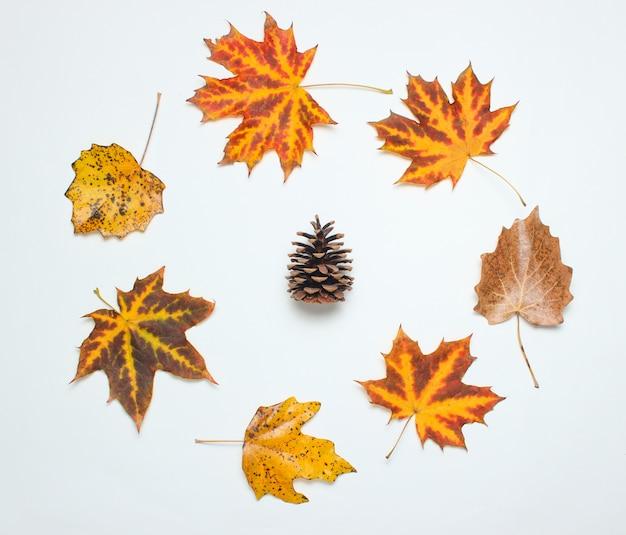 Szyszka w kreatywnym kręgu opadłych liści jesienią na białym tle. widok z góry
