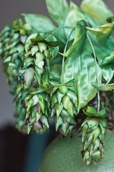 Szyszki zielonego chmielu. sztuczne kwiaty jedwabiu we wnętrzu
