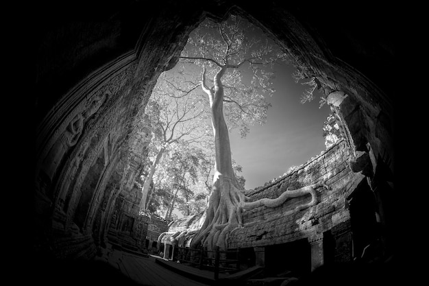 Ta prohm zamek w prowincji siem reap kambodży.