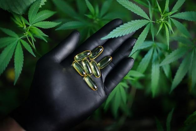 Tabletki z konopi cbd, grupa przezroczystych kapsułek kannabidiolu i zielonych liści konopi, kapsułki z olejem konopnym cbd