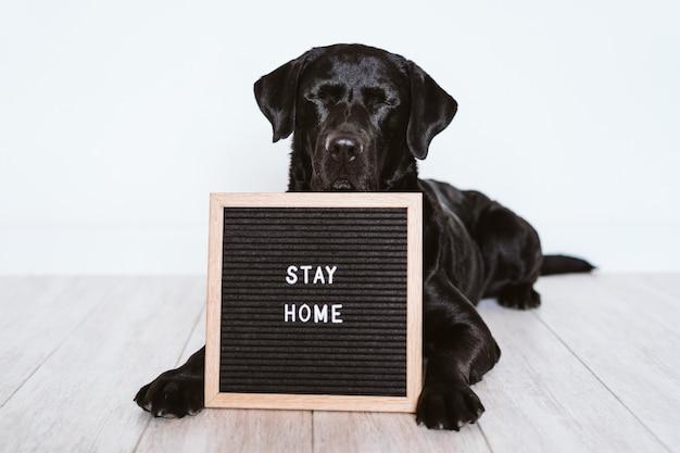 Tablica na listy z komunikatem stay home. poza tym piękny czarny labrador. koncepcja pandemicznego koronawirusa covid 2019