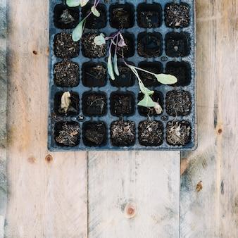 Taca do sadzenia z kiełkami