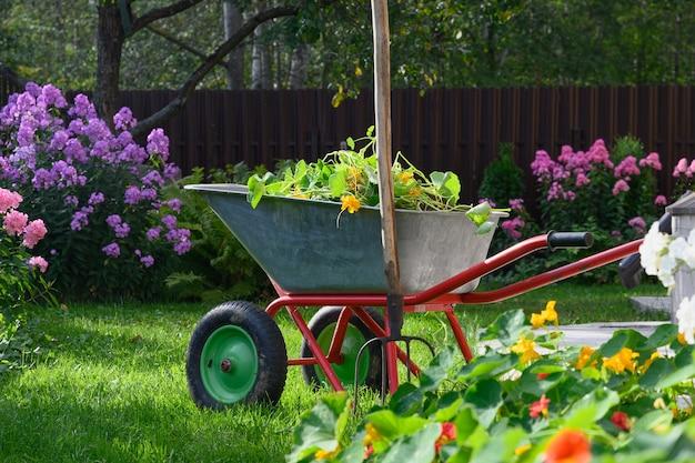 Taczka pełna humusu i kompostu na zielonym trawniku z zadbanymi kwiatami floksów w prywatnym gospodarstwie. ogrodnictwo sezonowe. na wolnym powietrzu.