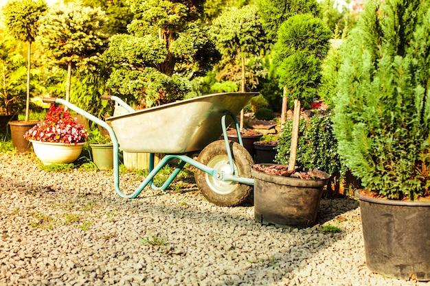 Taczka w pobliżu różnych zimozielonych roślin w sklepie ogrodniczym