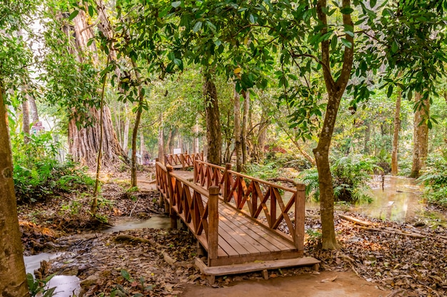 Tad kwang si siklawa w lecie, lokalizować w luang prabang prowinci, laos