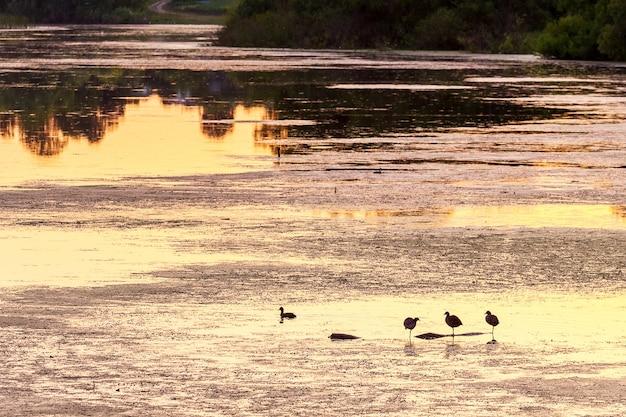 Tafla wody rzeki z odbiciem drzew i ptaków podczas zachodu słońca