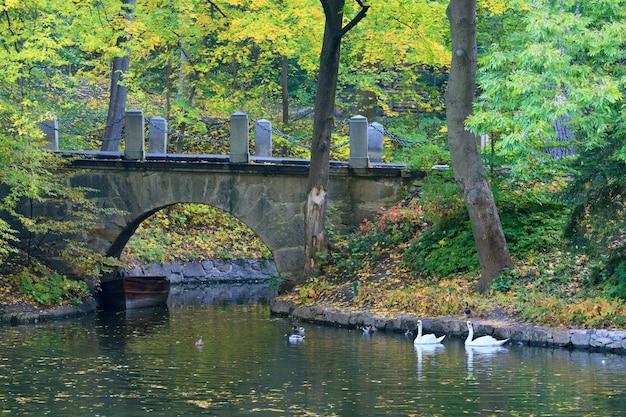 Tafla wody stawu z odbiciem kolorowych drzew i ptaków pływających w parku jesienią
