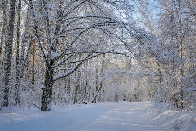 Tajemnicza droga w zimowym lesie. promienie słoneczne przebijają się przez pokryte śniegiem gałęzie drzew. koncepcja podróży zimowych podczas wakacji noworocznych.