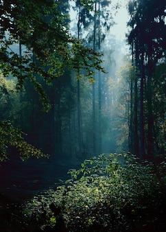 Tajemniczy krajobraz lasu