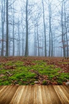 Tajemniczy mglisty dzień w dębowym lesie