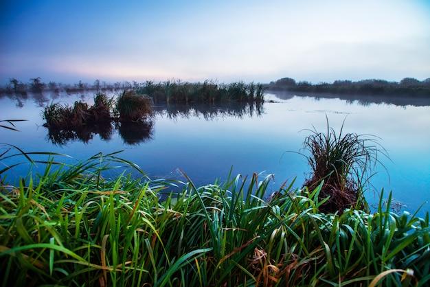 Tajemniczy obszar bagienny