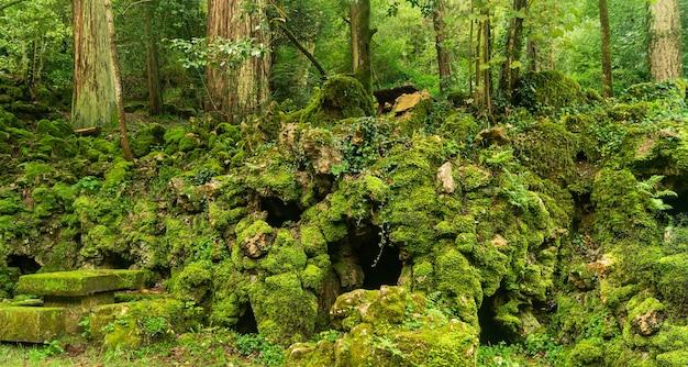 Tajemniczy zaczarowany las z grotą