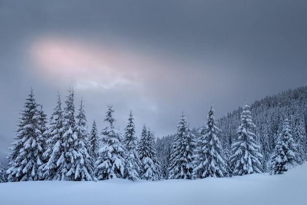 Tajemniczy zimowy krajobraz, majestatyczne góry z pokrytym śniegiem drzewem. zdjęcie z życzeniami. karpacka ukraina europa