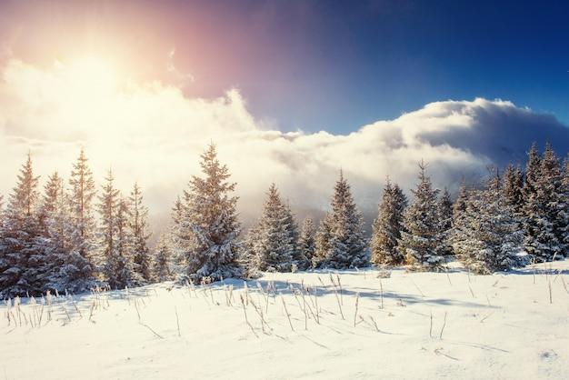 Tajemniczy zimowy krajobraz z mgłą